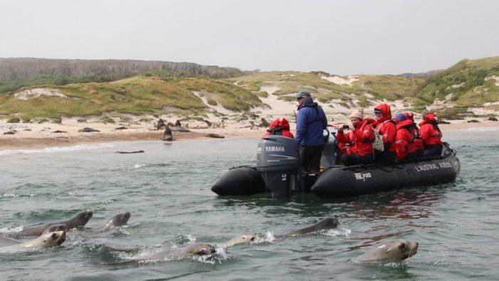 Ponant Seals & Zodiacs